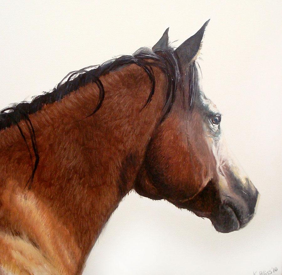 Bay Quarter Horse
