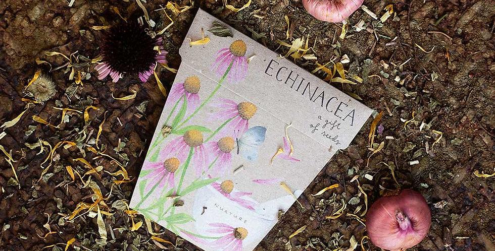 GIFT OF SEEDS -- ECHINACEA