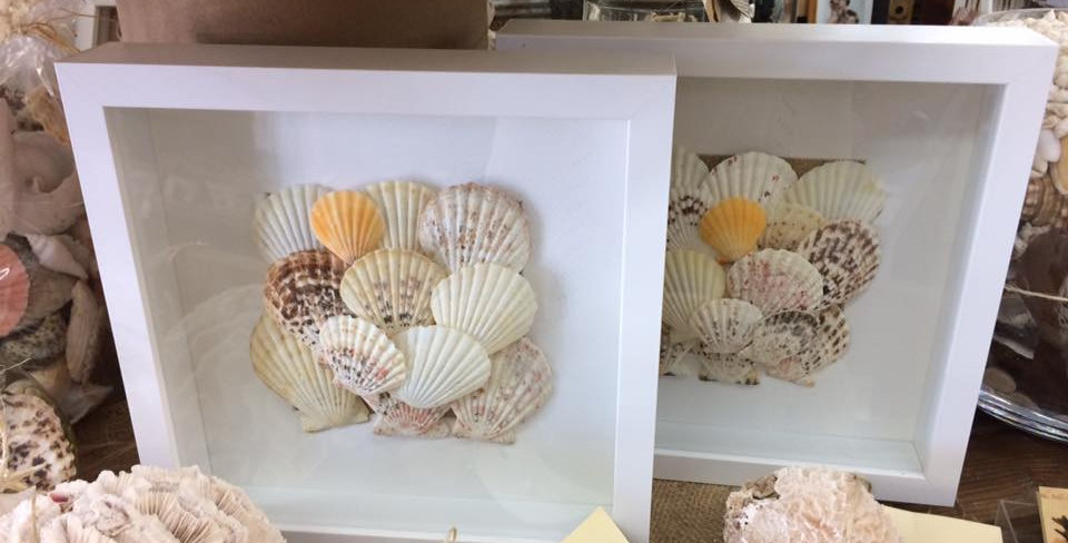 Scallop Shell Shadow Box