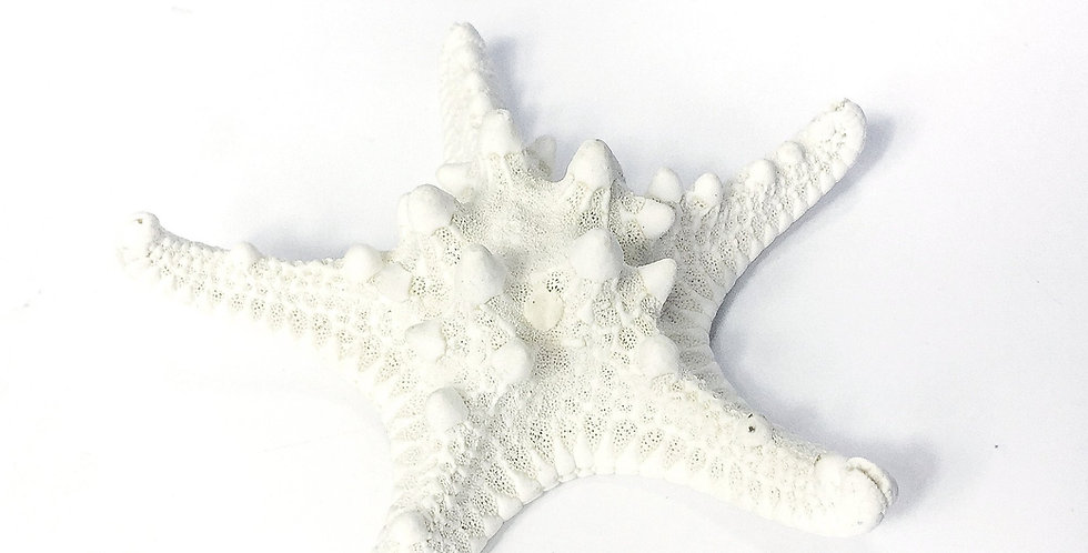 White Jungle Starfish (10 peices)