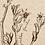 Thumbnail: GIFT TAG -- KANGAROO PAW