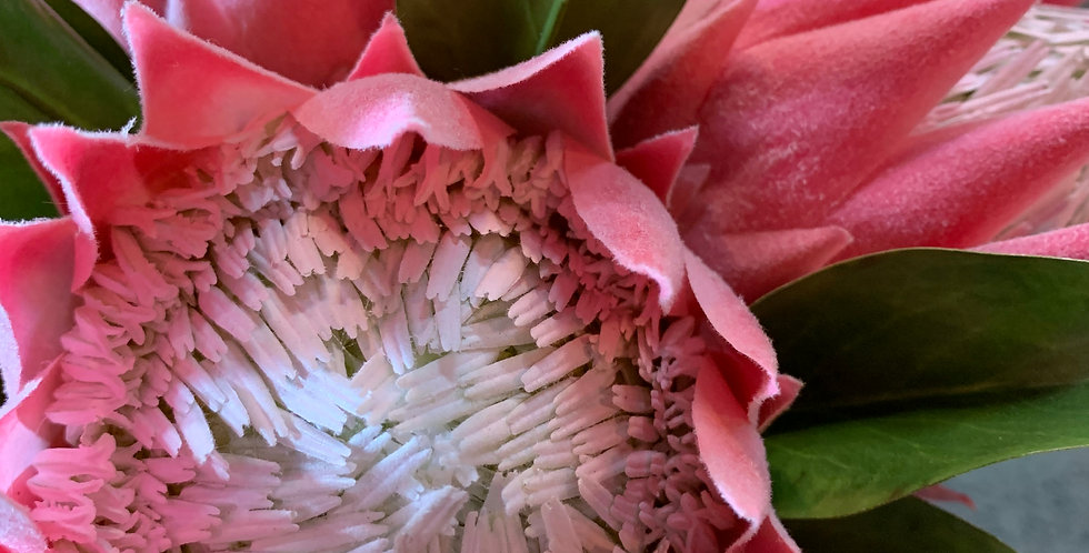 FAUX KING PROTEA PINK