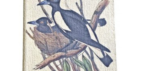 JOURNAL -- Australian Magpie