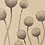 Thumbnail: GIFT TAG -- BILLY BUTTONS
