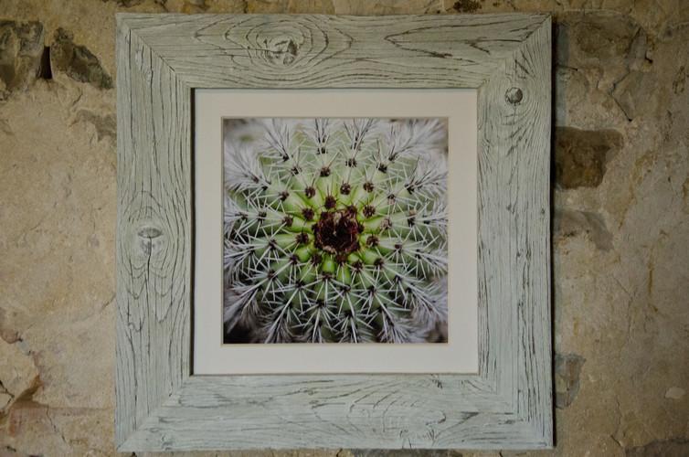 13 Cactus Susanne Paetsch fine art photography