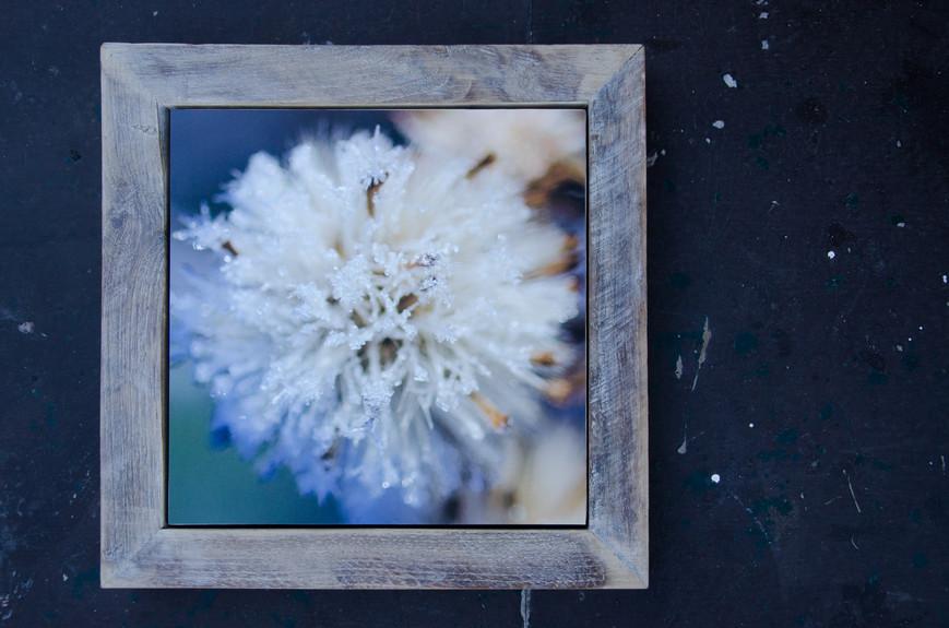 14 Frozen Susanne Paetsch Photography