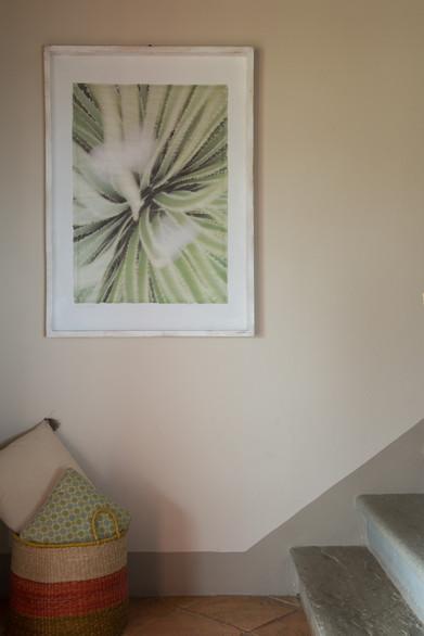 11 Cactus Susanne Paetsch photo