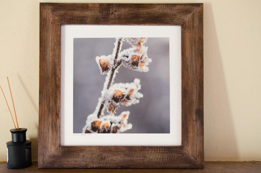 23 Frozen  - Susanne Paetsch photo