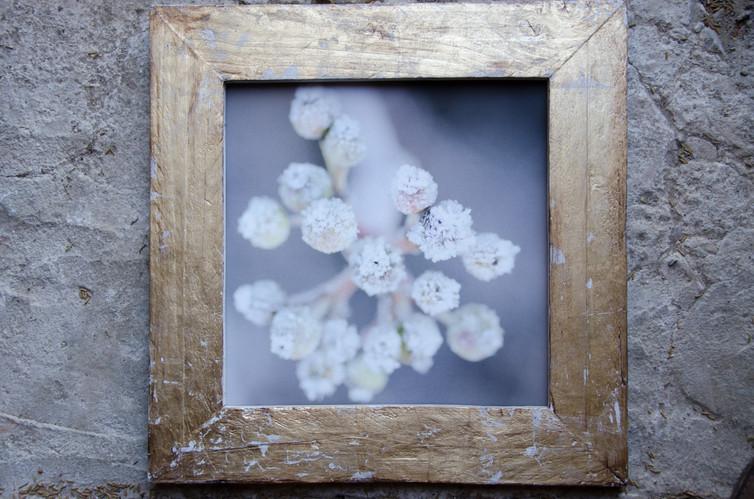 19 Frozen-Susanne Paetsch-Photography