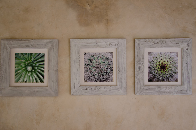 16 Cactus-Susanne Paetsch-Fine Art Photography