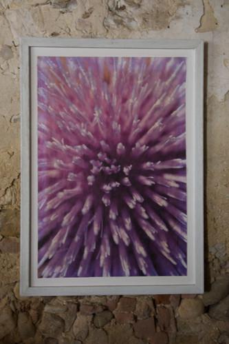 09 cactus Susanne Paetsch photo
