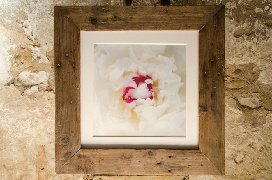 01 Floral mood- Susanne Paetsch-photo