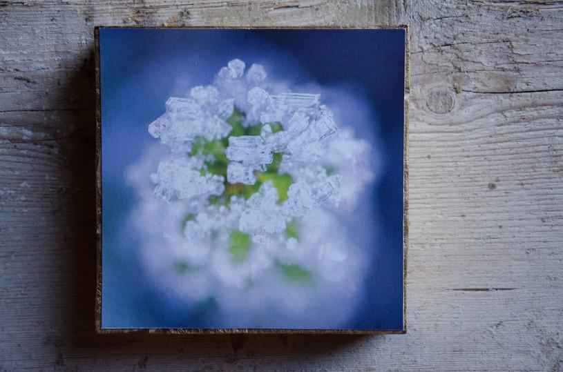 07 Cubes Susanne Paetsch photo
