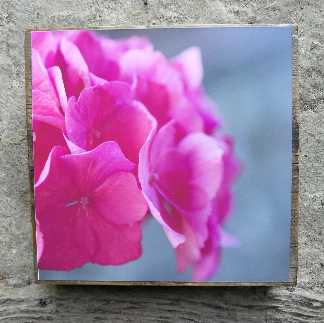 14 Floral mood Susanne Paetsch photo