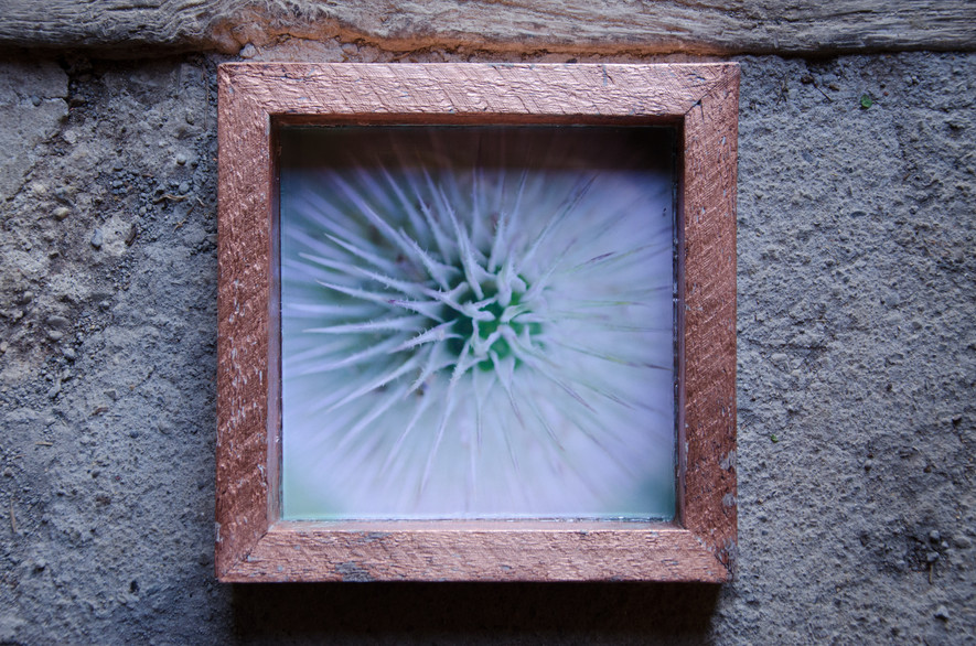01 Cactus Susanne Paetsch fine art photography