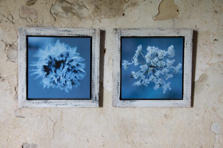 11 Frozen-Susanne Paetsch-Photography