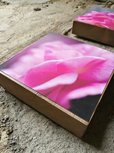 15 Floral mood Susanne Paetsch photo
