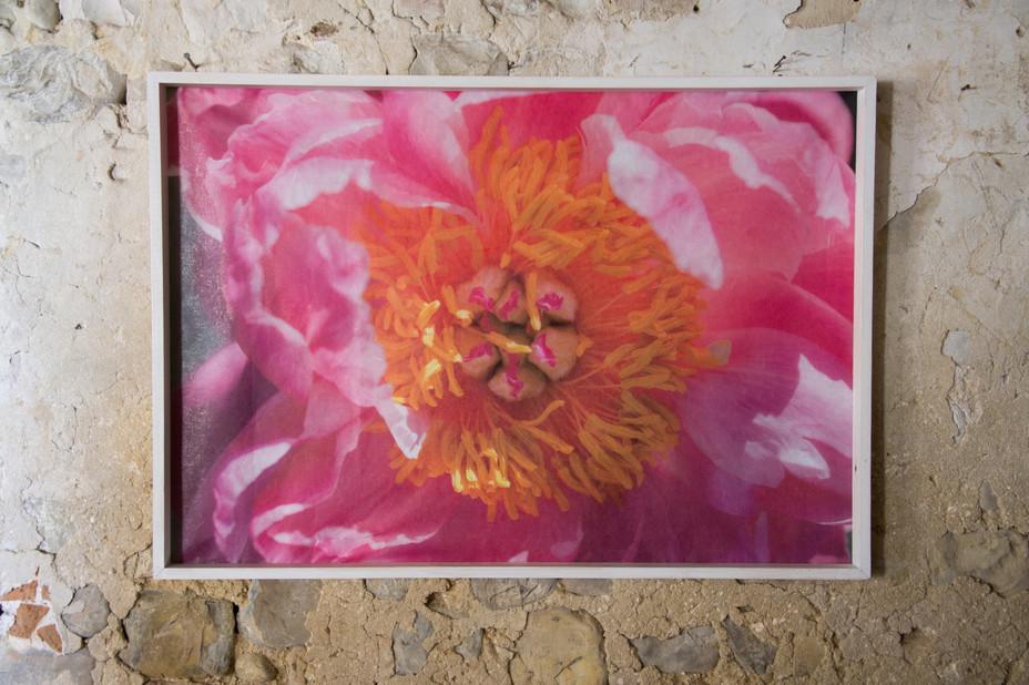 05 Floral mood - Susanne Paetsch -photo