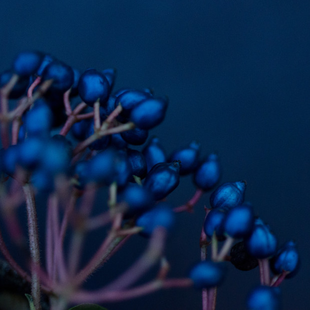 24 Susanne Paetsch Floral mood photo