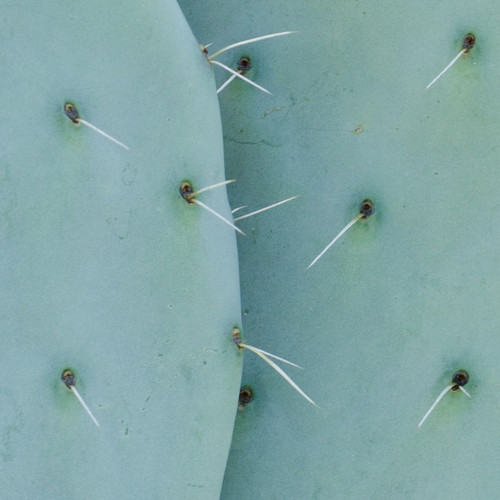 05 Cactus Susanne Paetsch fine art photography