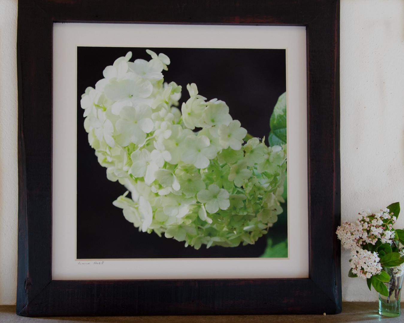 30 floral mood - Susanne Paetsch photo