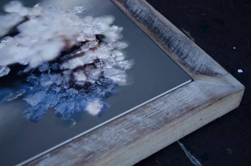 13 Frozen  - Susanne Paetsch photo