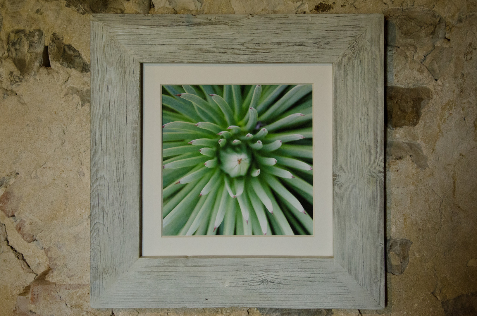 14 Cactus Susanne Paetsch fine art photography