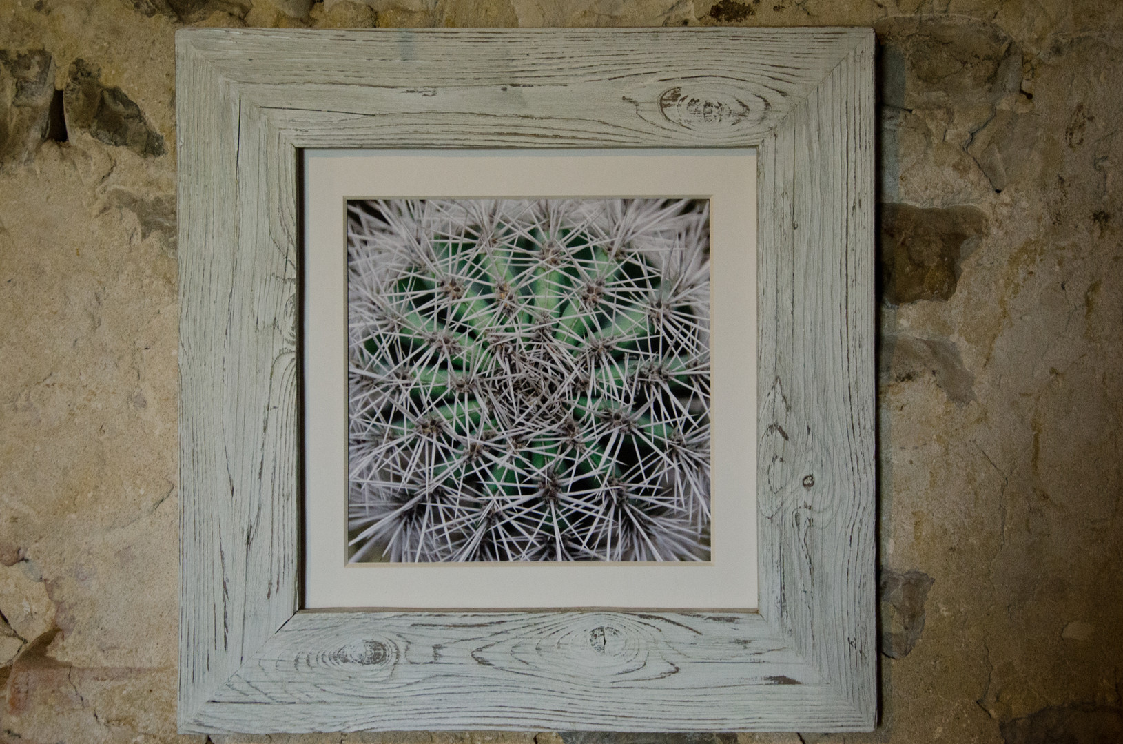 15 Cactus Susanne Paetsch fine art photography