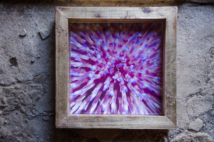 02 Cactus-Susanne Paetsch-Fine Art Photography