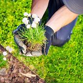 gartenplfege_bepflanzung.png