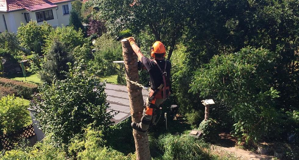 Baumfällung Baumpflege