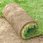 bepflanzung_rasen_beete_legen_anlegen.pn