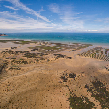 Oyster Beds, Jersey
