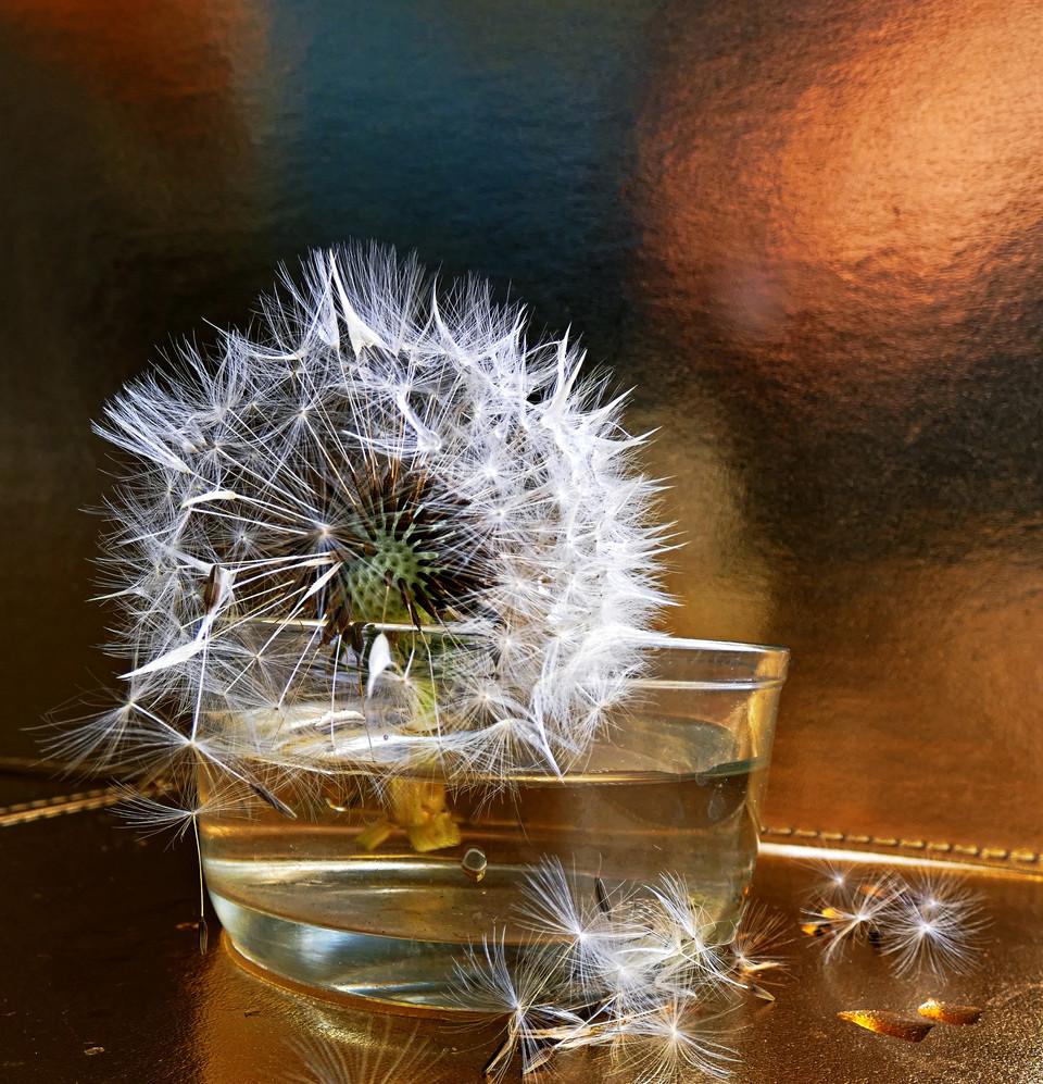 "2nd Place - ""Dandelion glow"" by Norma McKellar"