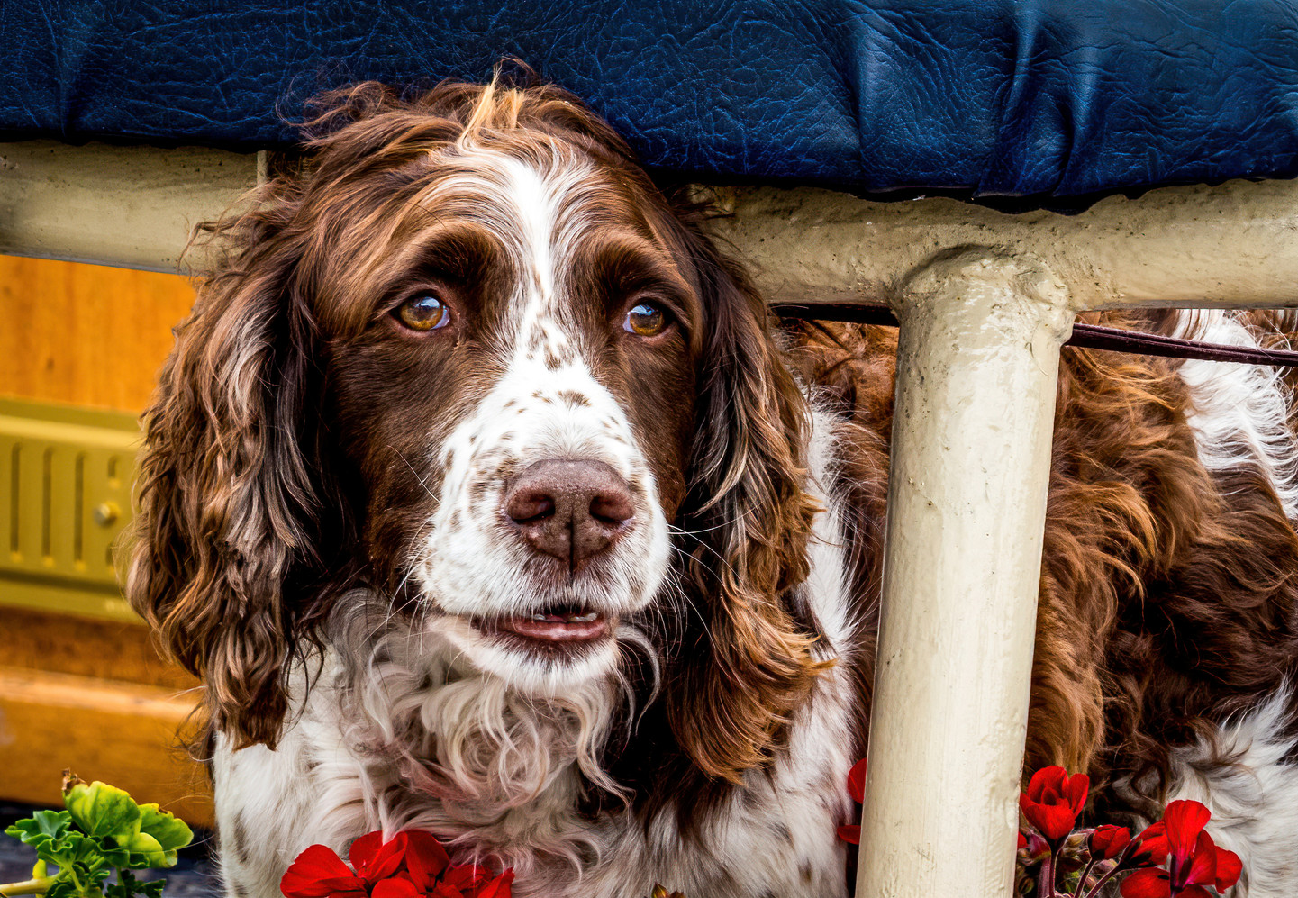 """Highly Commended - """"Man's Best Friend"""" by David Brennan"""