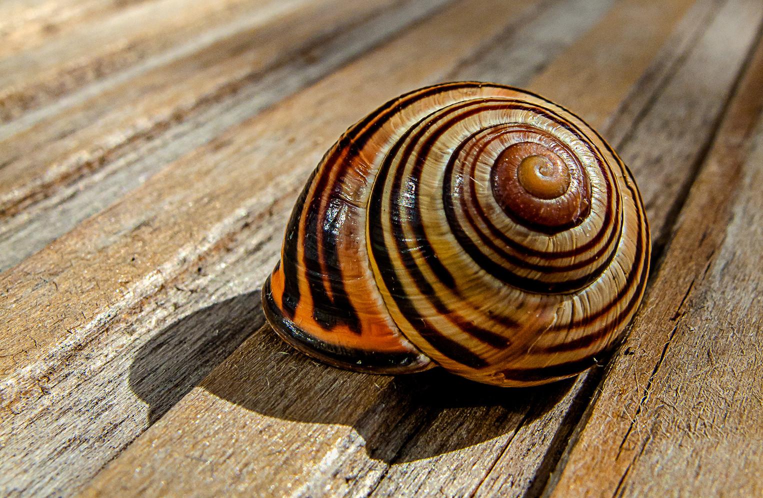 "3rd Place - ""Empty Shell"" by David Brennan"