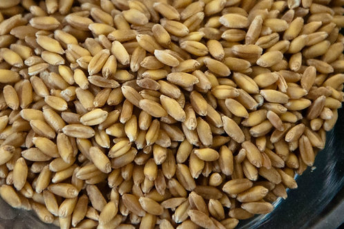 Combination of Colorado Windy White  and Colorado Rustic Red Wheat Berries