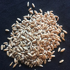 Scout 66 Heirloom Whole Wheat Berries