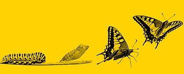 orugas y mariposas_edited.jpg