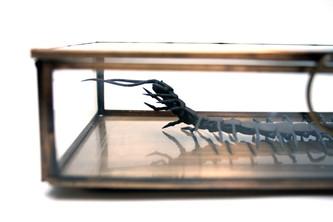 North Korean Centipede