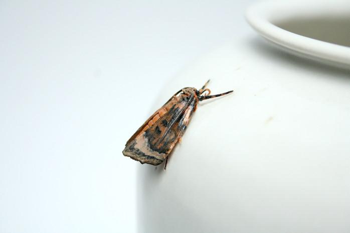 Moth Vase