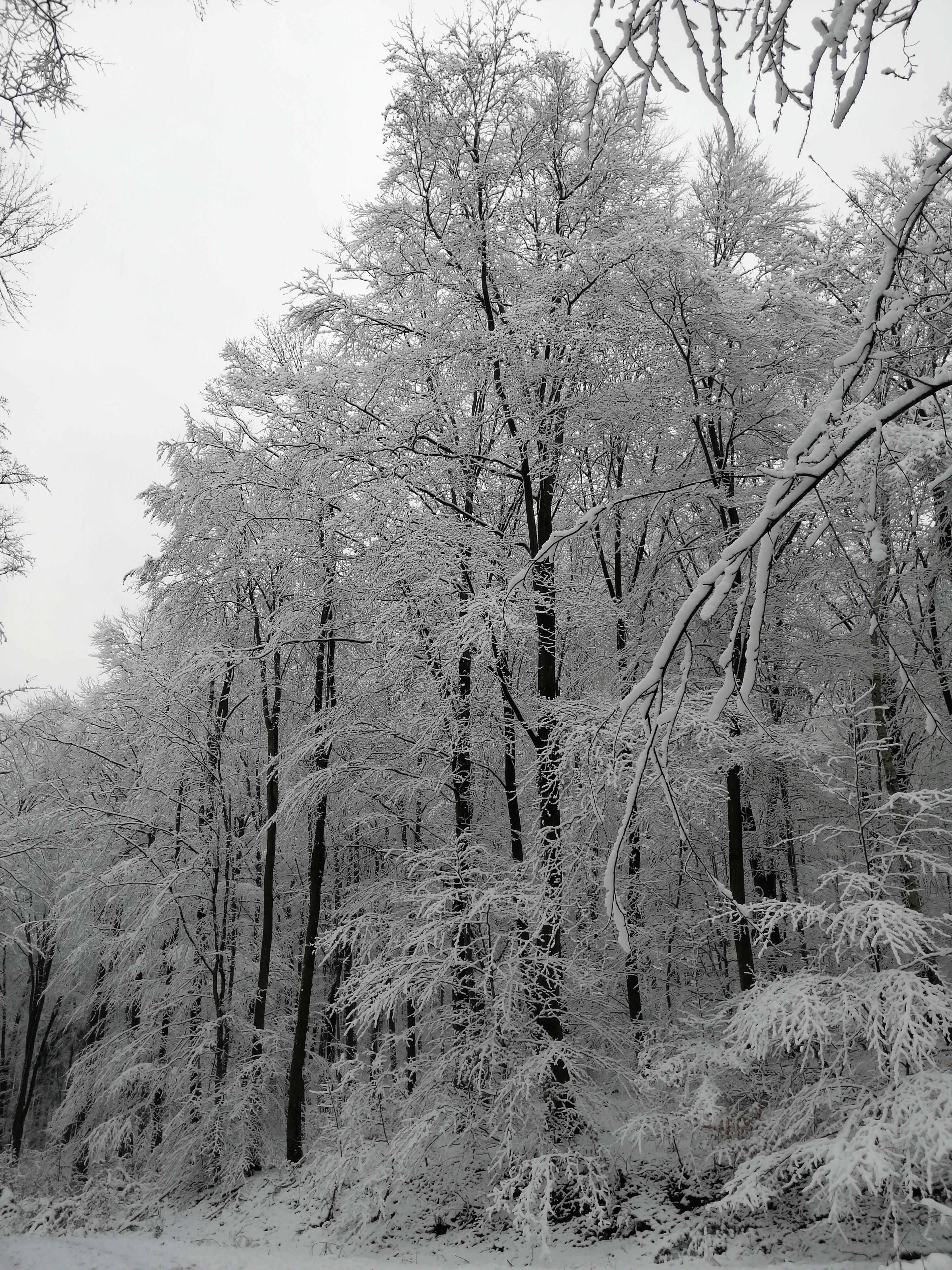 Winter-Wanderung