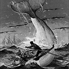 42_Moby Dick.jpg