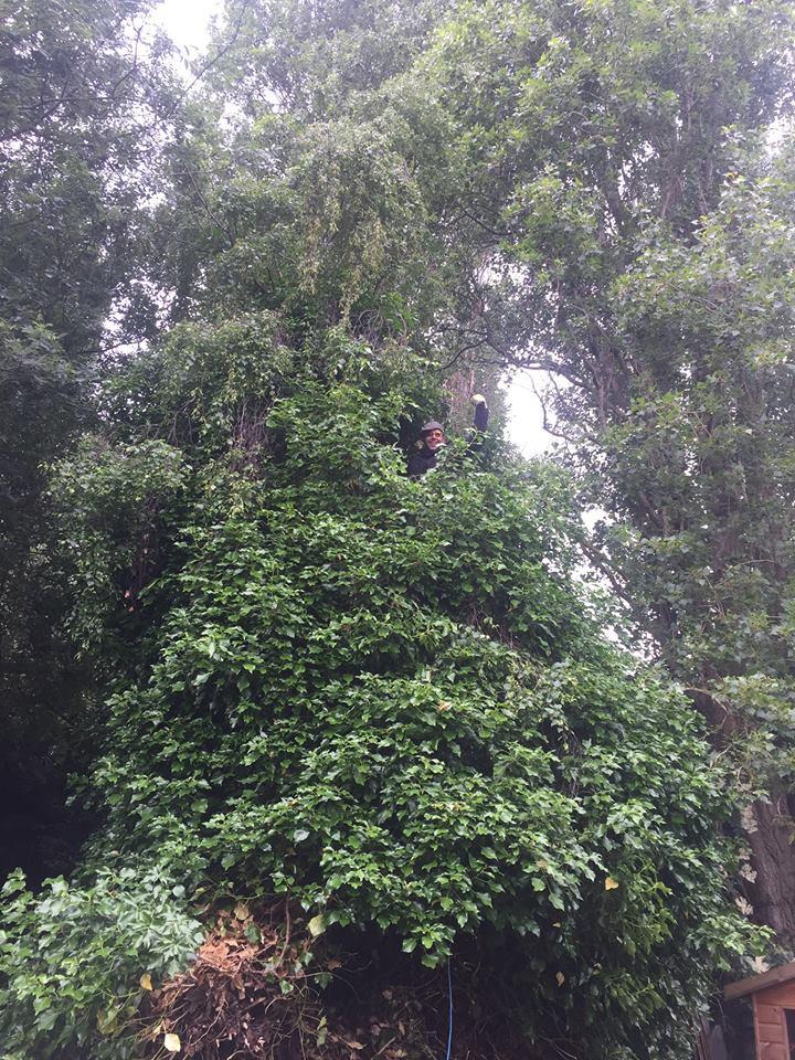 small tree surgery