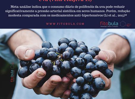 Benefícios dos Polifenóis da Uva para Pressão Arterial
