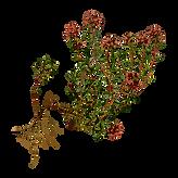 Espécie vegetal