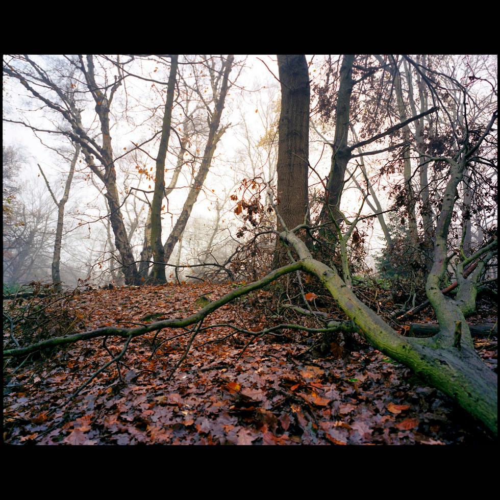 Title: Hampstead Heath #.1