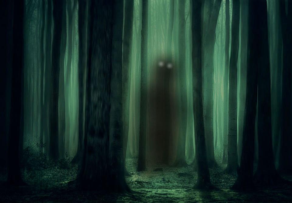 forest-3877365_960_720.jpg