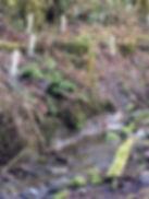 reforestation 2.JPG