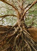 root2.jpg